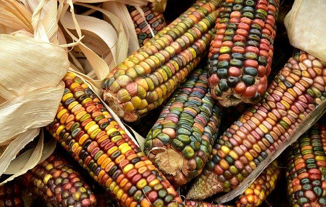 gutiérrez bosch y guatemala apoyo alimentario