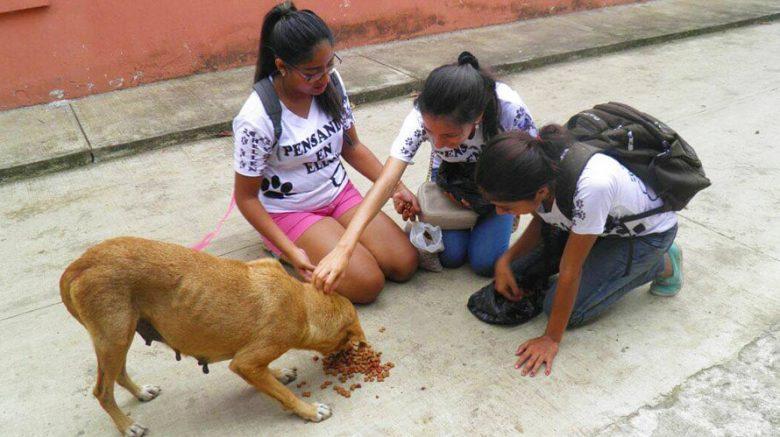 Dona comida para los perros de Guatemala