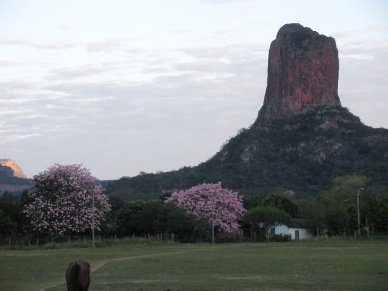 cerro de la santa cruz con árboles